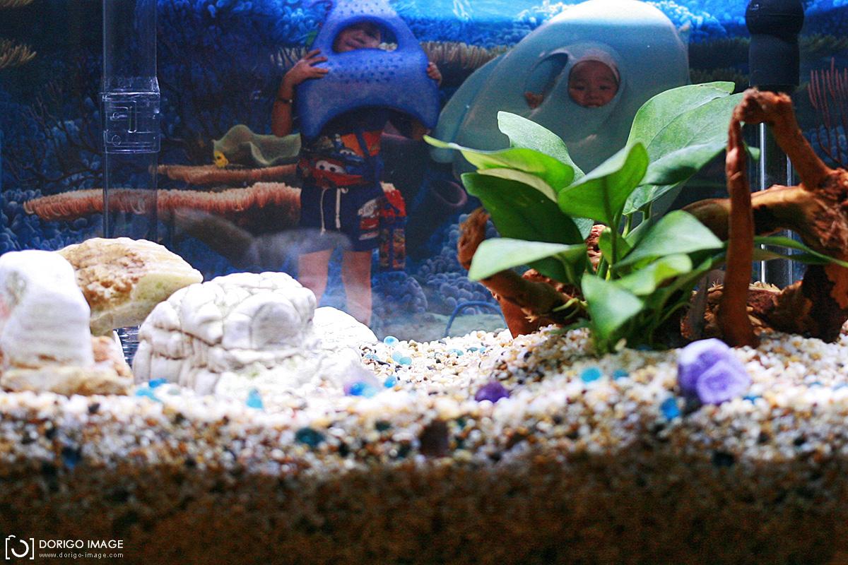 水族養魚、水草器材心得分享(持續更新)